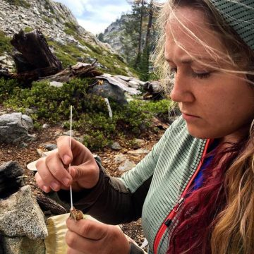 Kim Cook swabbing the feet of a Cascades frog to check for the presence of Batrachochytrium dendrobatidis, a sometimes-deadly fungal pathogen of amphibians