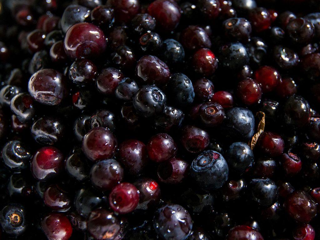 Huckleberries after picking
