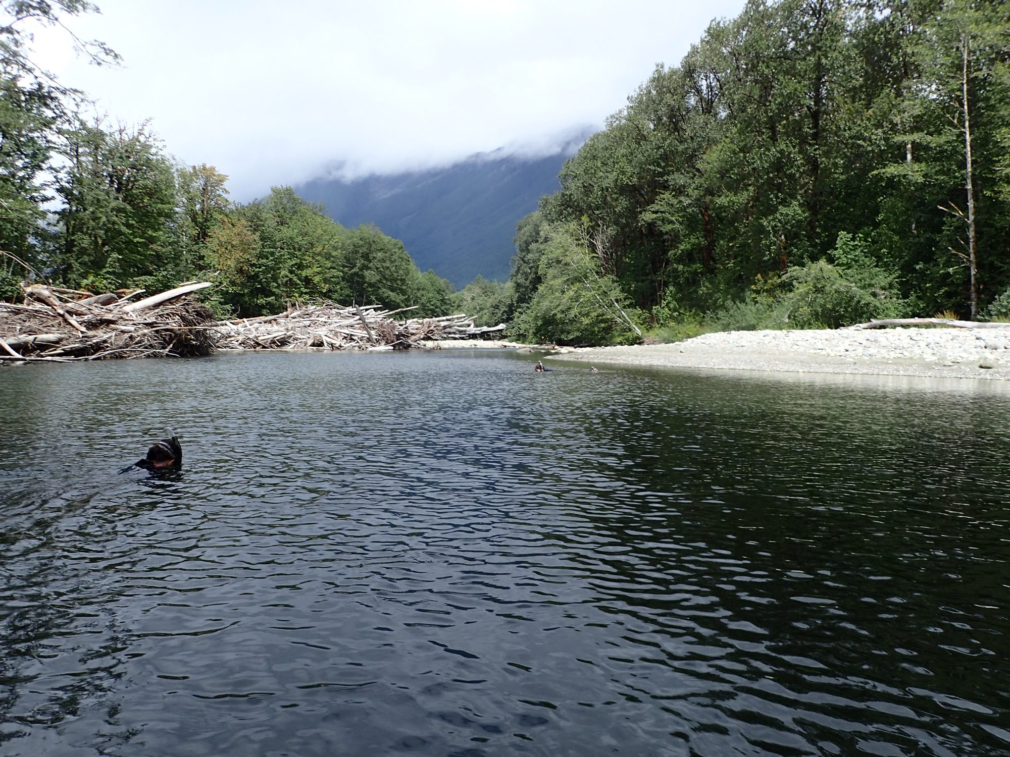 Snorkel surveying on the North Fork Stillaguamish River near Fortson Hole