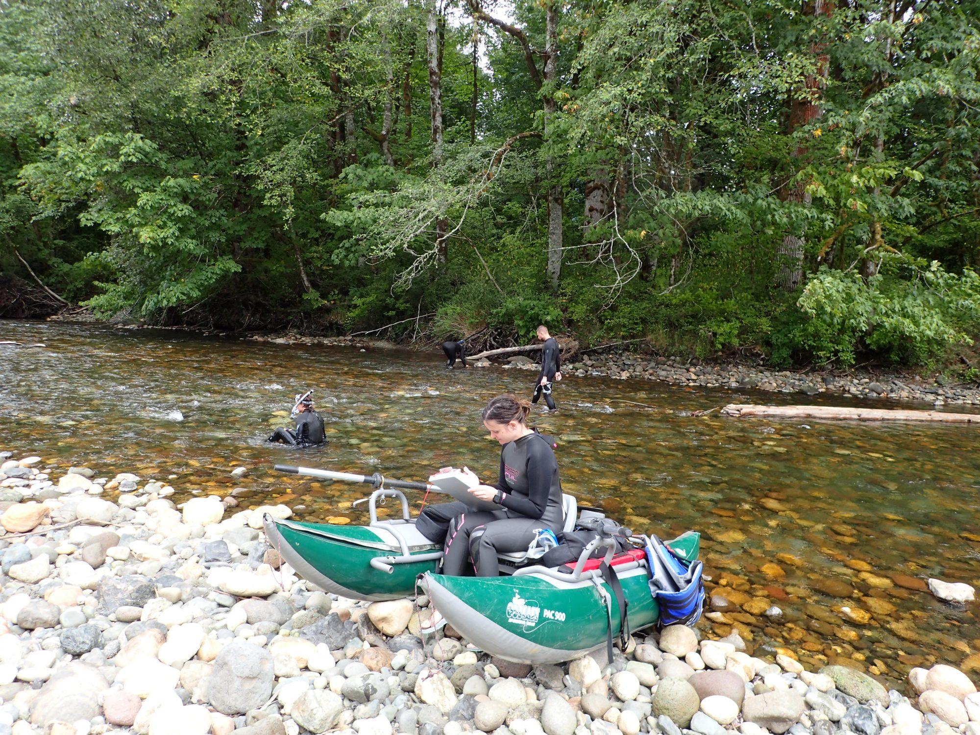 Snorkel team sets up for surveying in the North Fork Stillaguamish River