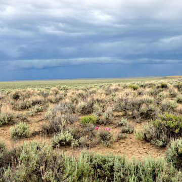 Sagebrush steppe in Seedskadee National Wildlife Refuge, southwest Wyoming