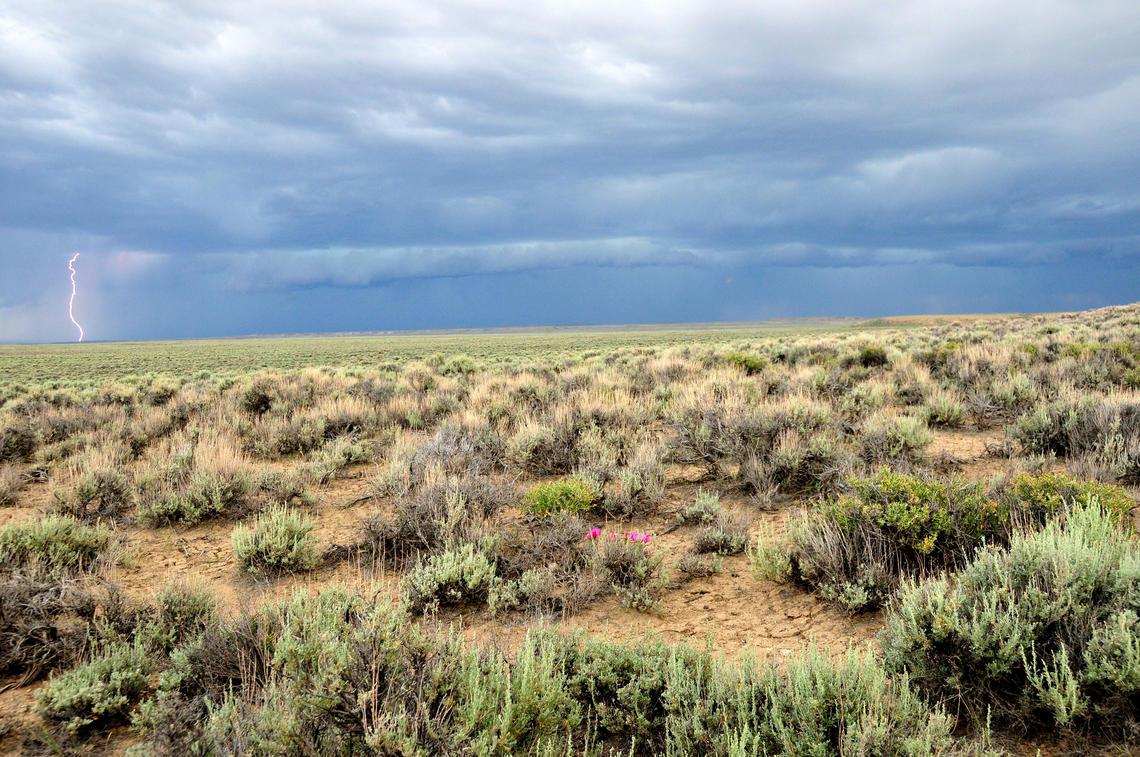 Sagebrush steppe in Seedskadee National Wildlife Refuge, southwest Wyoming