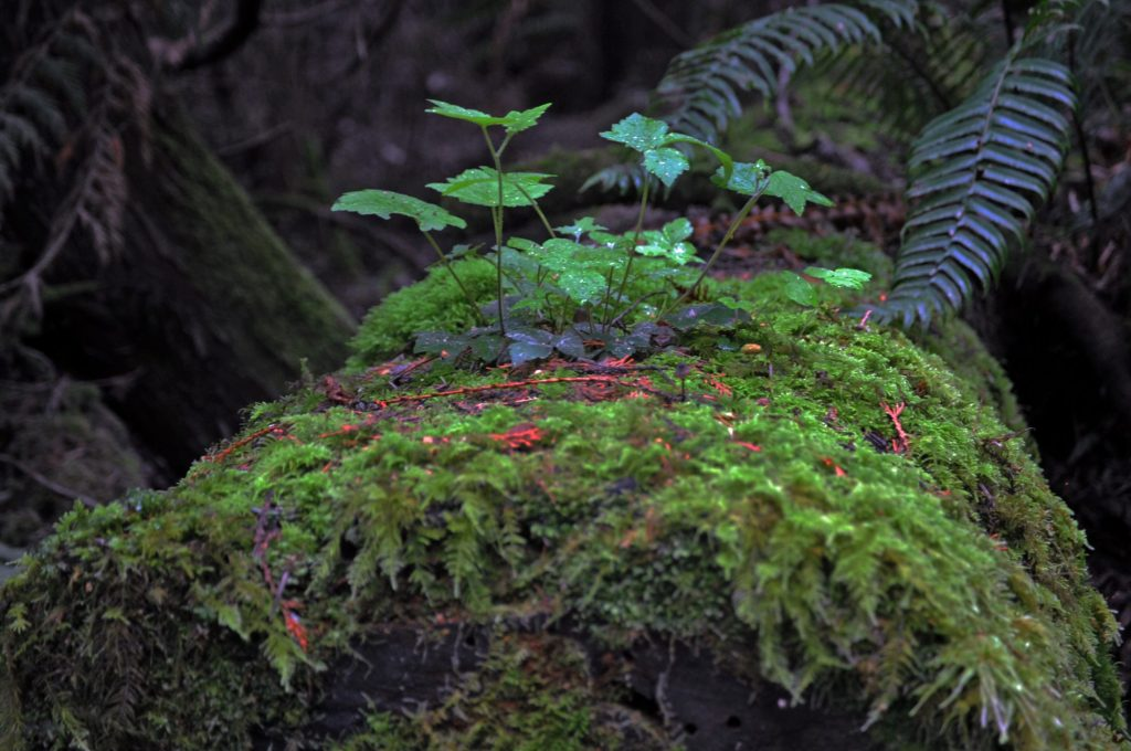 Close-up of mossy log at Dungeness National Wildlife Refuge, WA